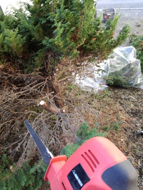 葛飾区で庭の周りを片付けて植木も株から伐採。