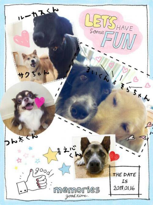 チリの犬事情から日本を見てみる