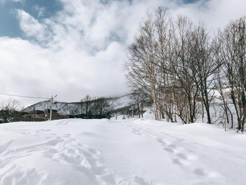 雪に残された足跡から何がわかる?