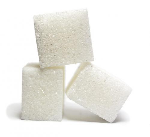 犬猫の糖質と脂質のコントロール