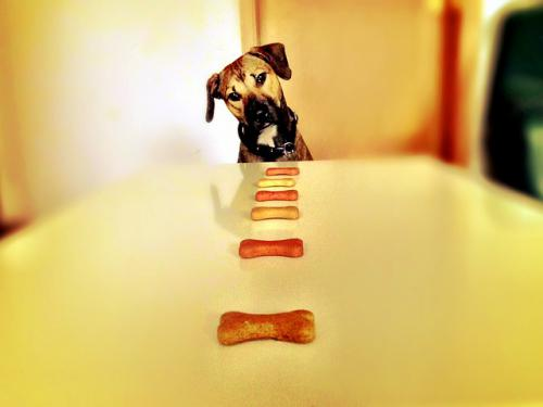 犬猫、食べ過ぎると食欲が増す