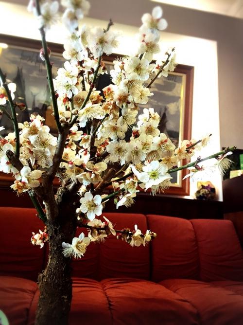 新しいお花 春 六本木 美容室アレルギー カラー 花粉症