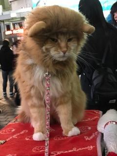 渋谷駅ハチ公前にいた新種のネコ⁉︎