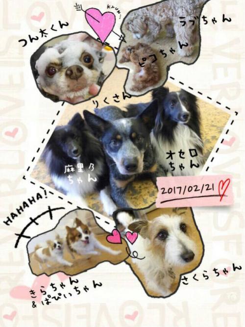 スロベニアの犬事情から日本を見てみる