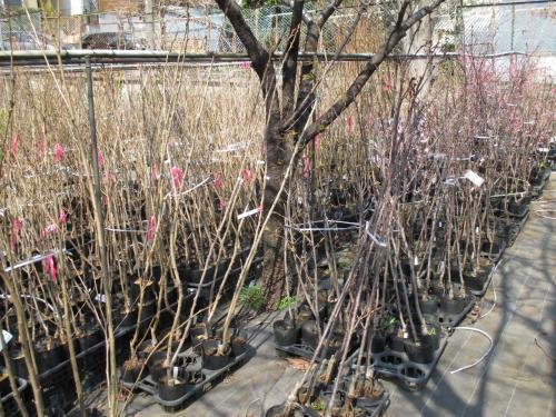 たまには圃場のご紹介!植木や苗木の販売・通販!