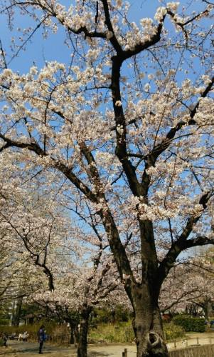 やっと春ですね!!!