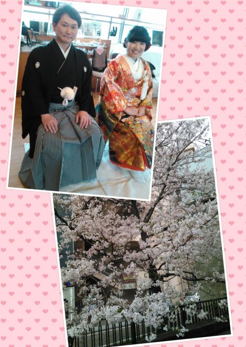 和装前撮り、桜満開の横浜に出張着付け!