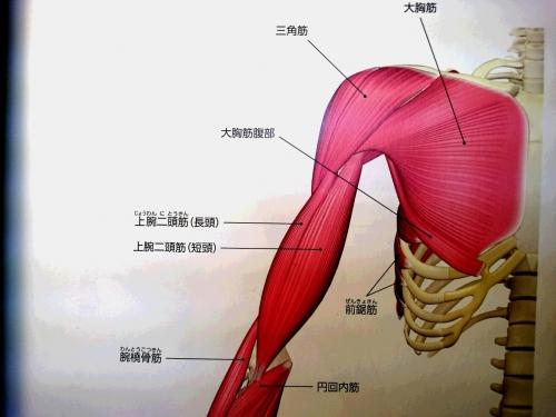 四十肩五十肩の痛み こり ハリも腱引きで解消 取手 柏 松戸
