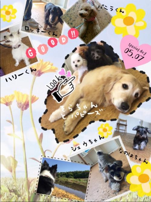 千葉、田舎の犬事情