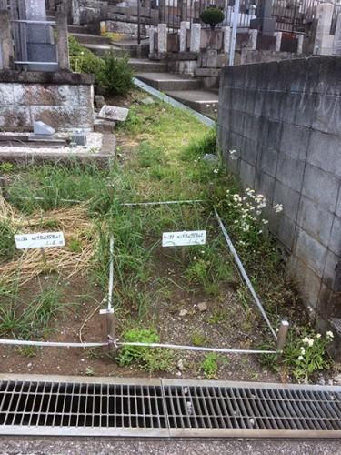 三ツ沢市営墓地「T」様