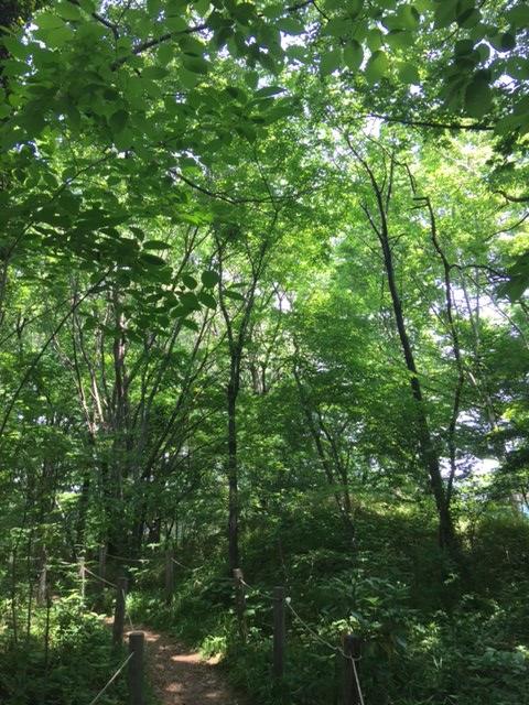 トトロの森②