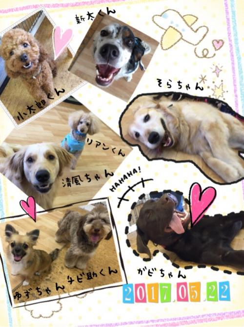 韓国の犬事情