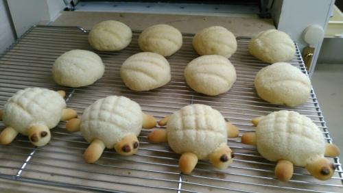「カメさんメロンパン」作ってみました!