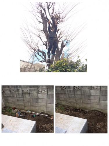 墓回り掃除、高所 枝切り、処分、雑草 枝 ゴミ処分