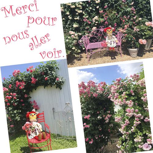ガーデンスタジオ:バラについて