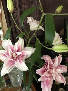 こんな八重咲きの百合の花は 初めて見ました