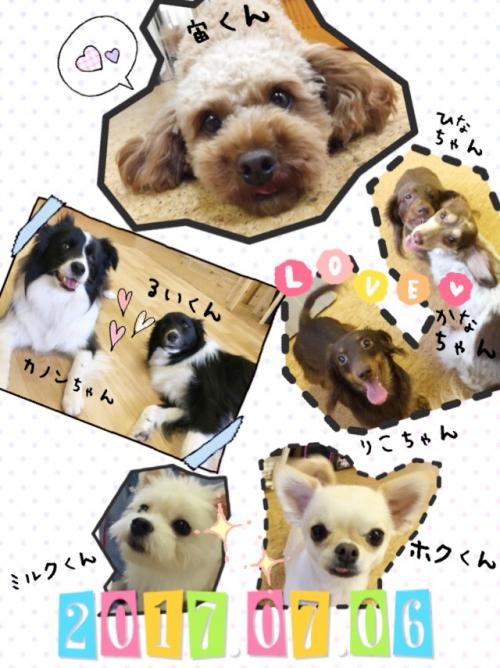 日本の犬事情