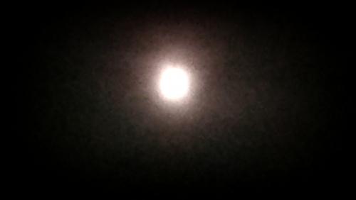 本日満月です。