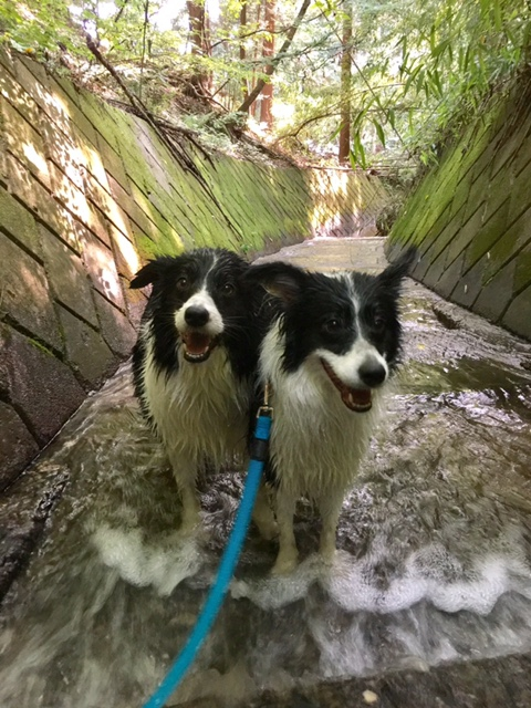 犬と川遊びをする上での注意点とは