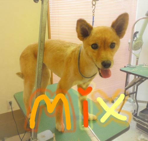 MIXのトリミング(*^-^*)