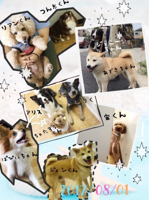 世界の犬事情