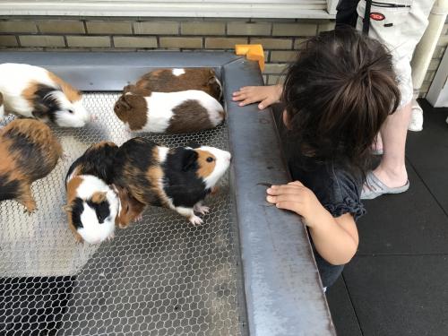 夏休み荒川遊園地で楽しみました!! 調布美容院