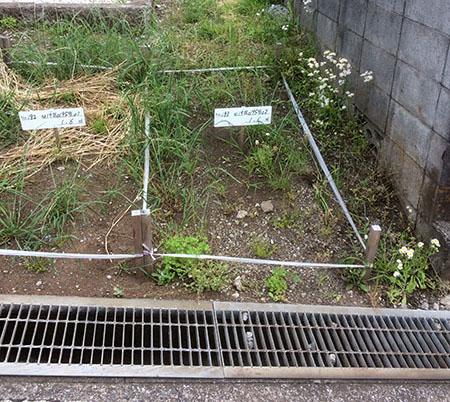 三ツ沢墓地