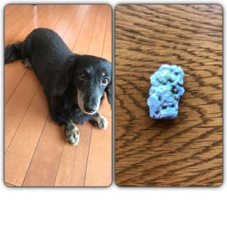 うちの犬が 人用のガムを噛んでしまいました!