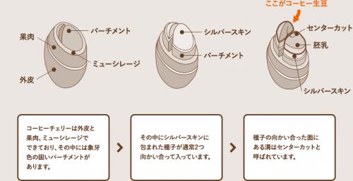 コーヒーの知識[其の二]