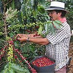 コーヒー豆の産地と味の特徴