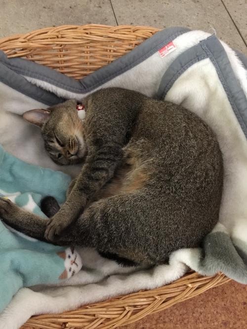 看板猫の朝!