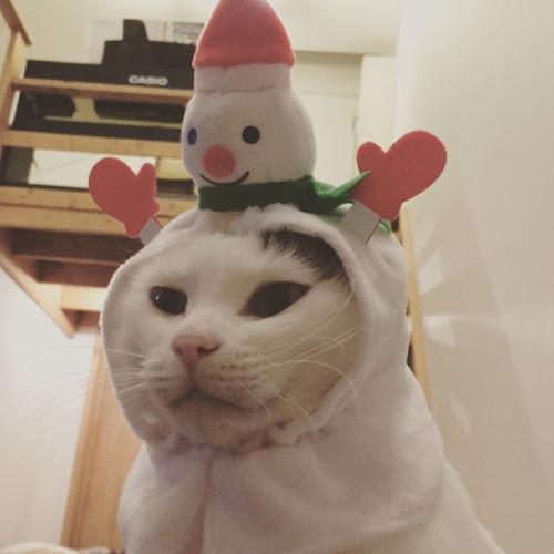 猫に雪だるま
