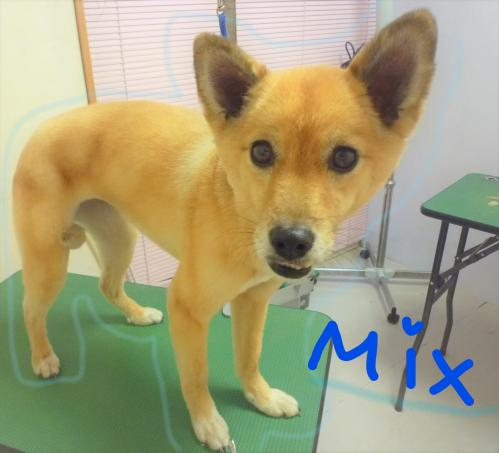 MIXのトリミング(^o^)