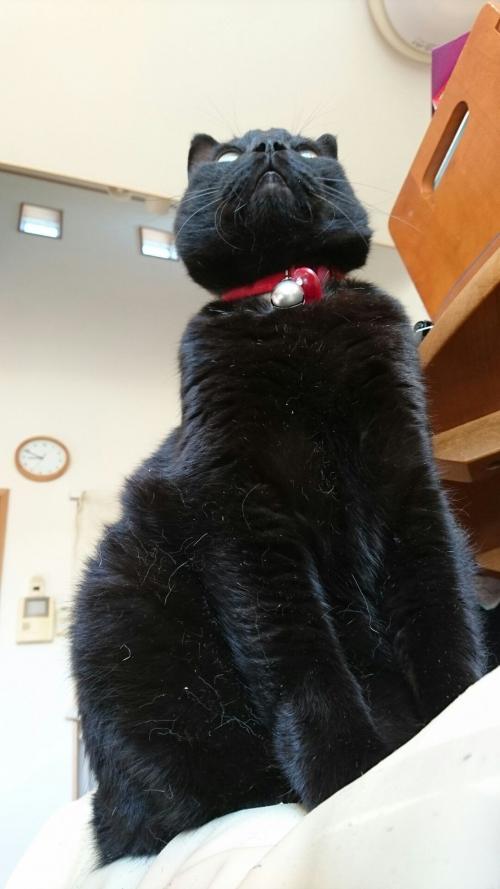 黒はよごれが目立つ