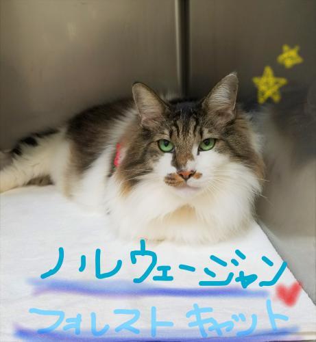 猫のグルーミング(*^-^*)