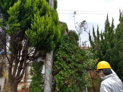 新小岩で家の周りの木を全部伐採