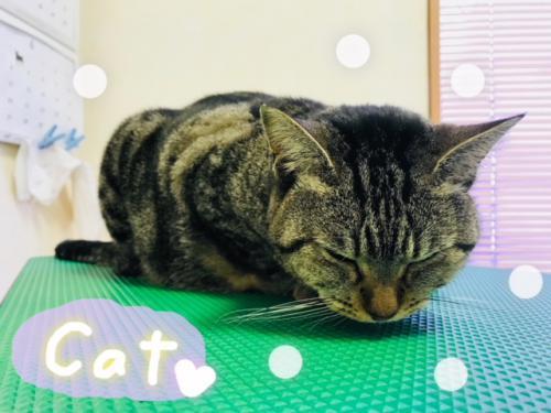 猫ちゃんのグルーミング(*^-^*)