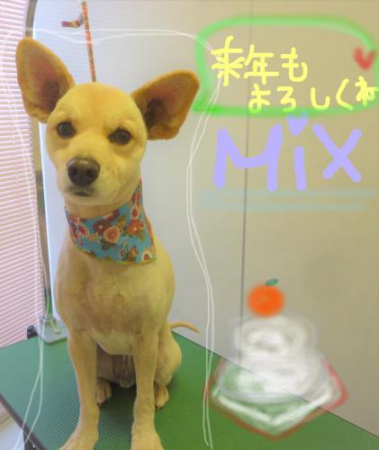 MIXのグルーミング(*^▽^*)