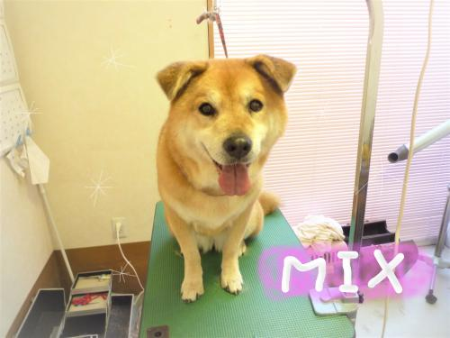 MIXのシャンプー(*'ω'*)
