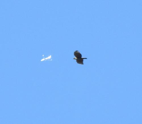 飛行機とランデブー