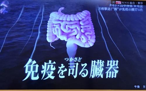 千歳烏山で腸内フローラ、内臓調整はオリンピア鍼灸整骨院