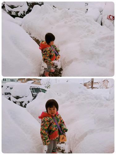 雪の情報便り