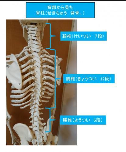 背中が固まることによる腰痛のパターン