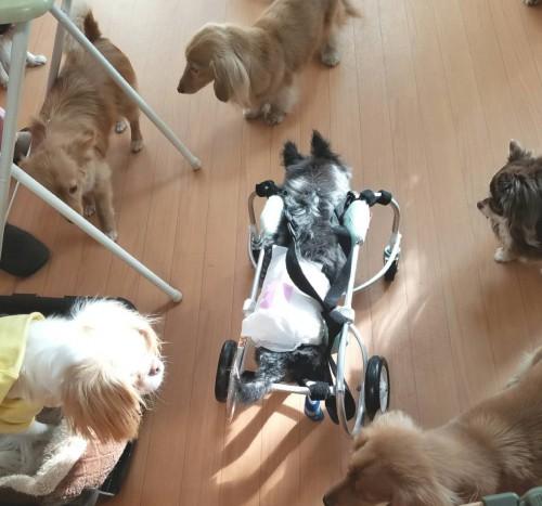 車椅子で頑張ってます。