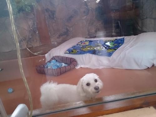『猫の日』でもホテルのワンちゃん可愛いから載せました。