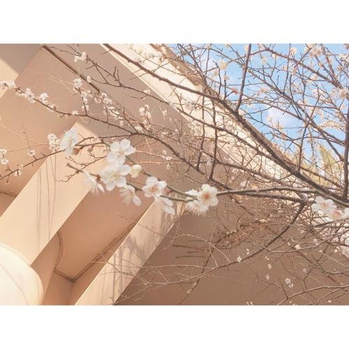 春になったから。調布 国領 美容室