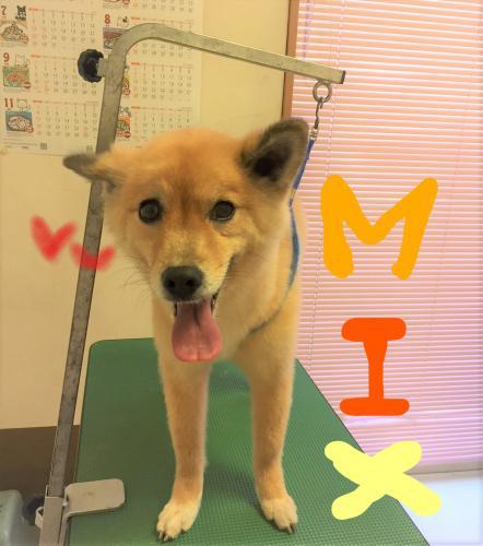 MIXのシャンプー(*^-^*)