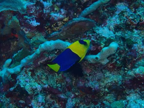 バリ島ダイビングツアー報告の続きです!