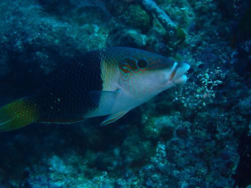 バリ島の海では地味ですが、個性派です