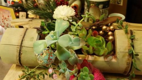 店内に飾ってある多肉植物はスタッフさんが育ててます^^
